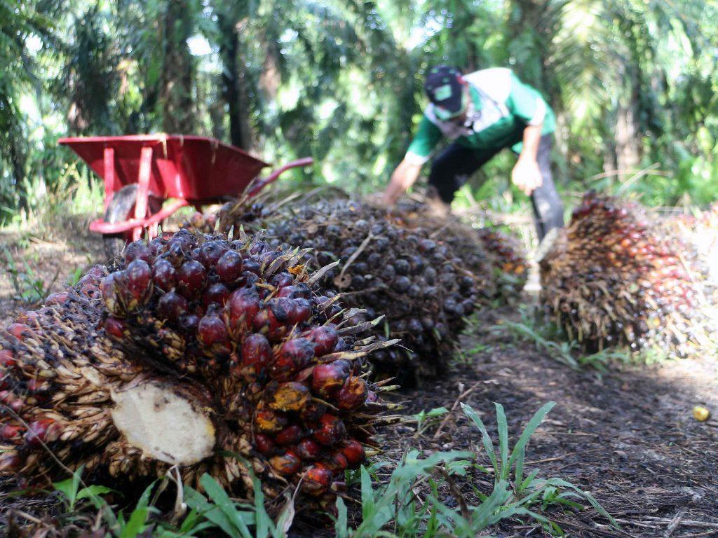 Industri Sawit Bisa jadi Objek Vital Nasional