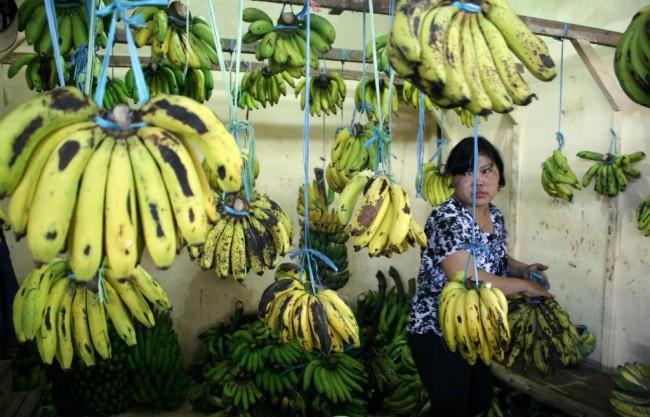 Komisi IV Apresiasi Ekspor Pisang 18 Ton di Halmahera Barat