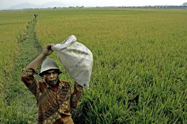 Bengkulu Selatan Targetkan Pembagian 3.800 Sertifikat Lahan