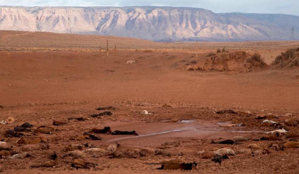 Hampir 200 Kuda Liar Mati Kehausan di Arizona