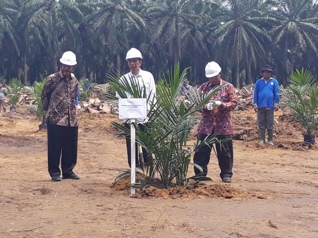 Jokowi: Peremajaan Sawit akan Menyetarakan Produksi