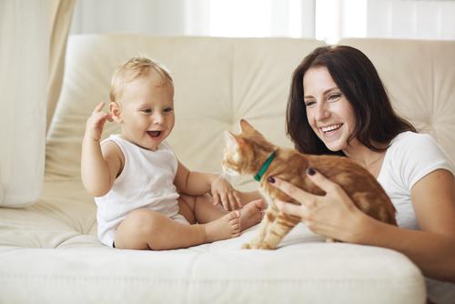 Aturan Memelihara Kucing Bagi Anda yang Memiliki Bayi