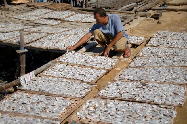 Pasokan Ikan ke Pasar Induk Palembang Stabil