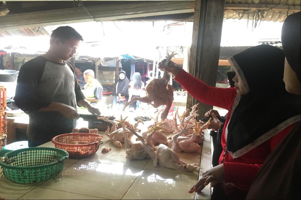 Meski Harga Naik, Ayam Potong Tetap Diincar Jelang Ramadan