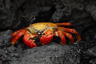 Pengusaha Kendari Ekspor Kepiting ke Singapura