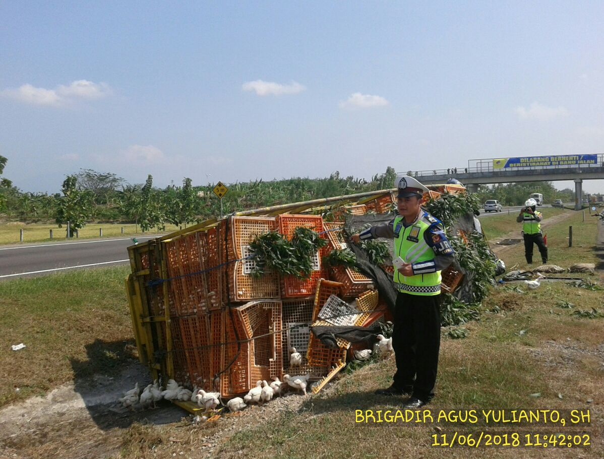 Truk Pengangkut Ayam Terguling di Cipali, Satu Terluka