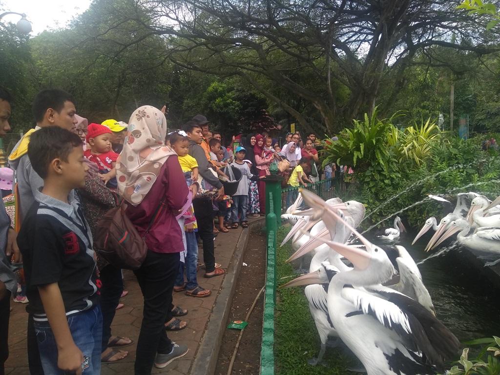 Libur Pilkada, Pengunjung Ragunan Turun 50%
