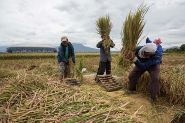Indonesia Masih di Fase Terciptanya Ketahanan Pangan