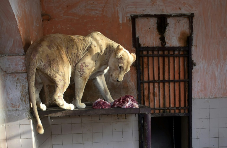 Shortage of Vets Spells Misery for Karachi Zoo Animals