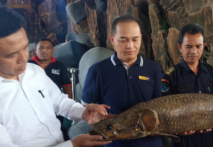 Polisi Ultimatum Pemelihara Arapaima di Jombang
