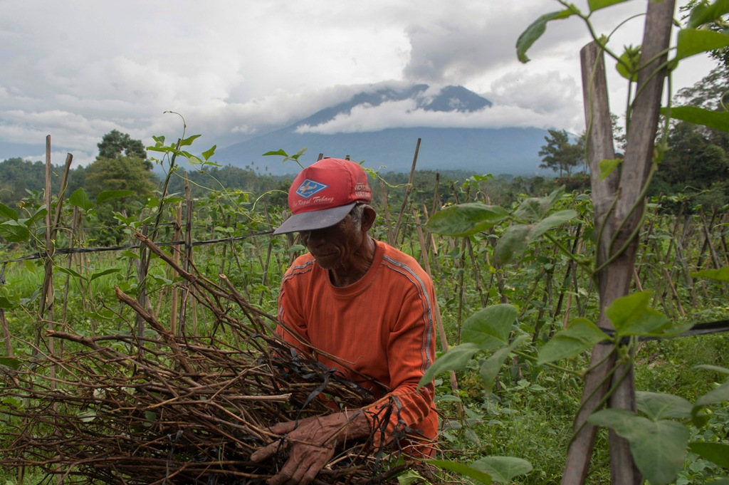 Sejumlah Petani Gagal Panen Akibat Erupsi Gunung Agung