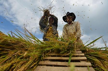 Digitalisasi Pertanian Diyakini Tingkatkan Produksi Beras hingga 20%