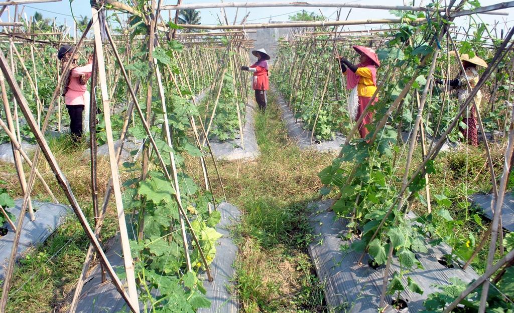FAO: Pertanian Indonesia Bergerak Lebih Dinamis