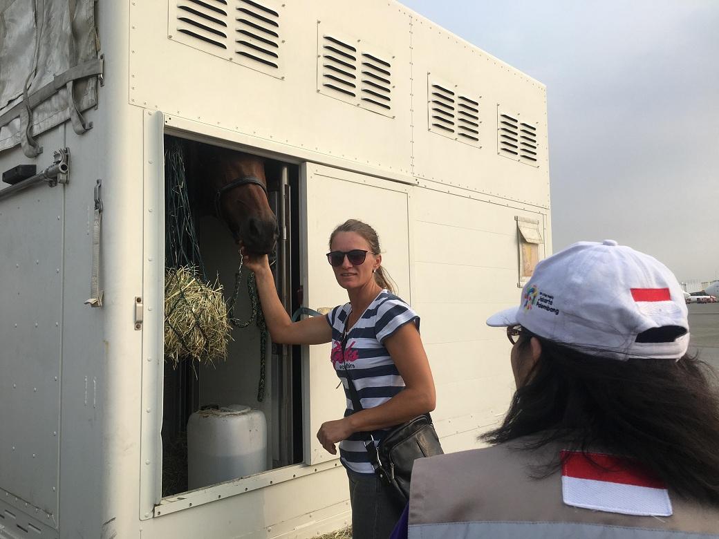 17 Kuda Asian Games asal Belgia Tiba di Bandara Soetta