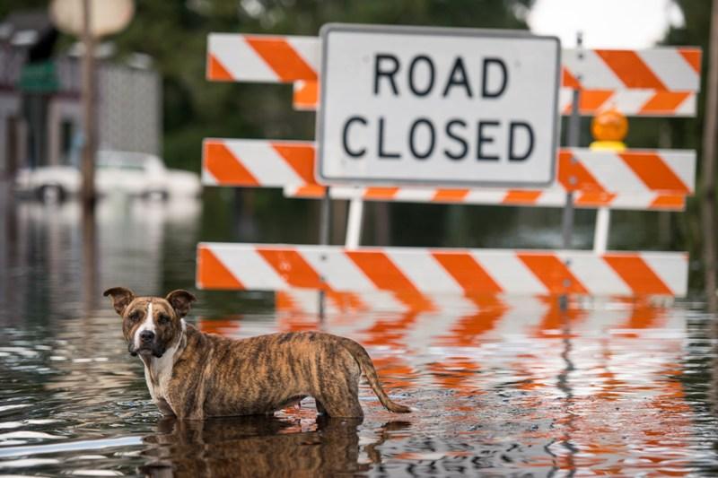Badai Florence