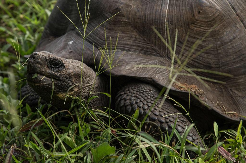 100 Kura-Kura Dicuri dari Kepulauan Galapagos
