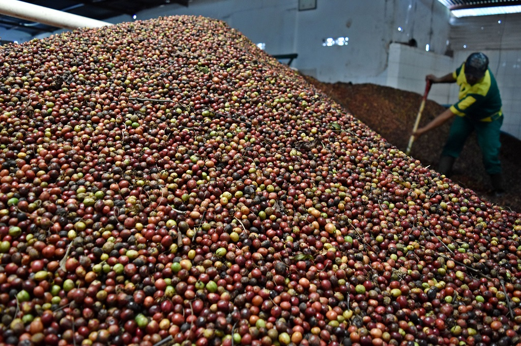 Kopi Indonesia Coba Penetrasi Pasar Jerman via Coteca