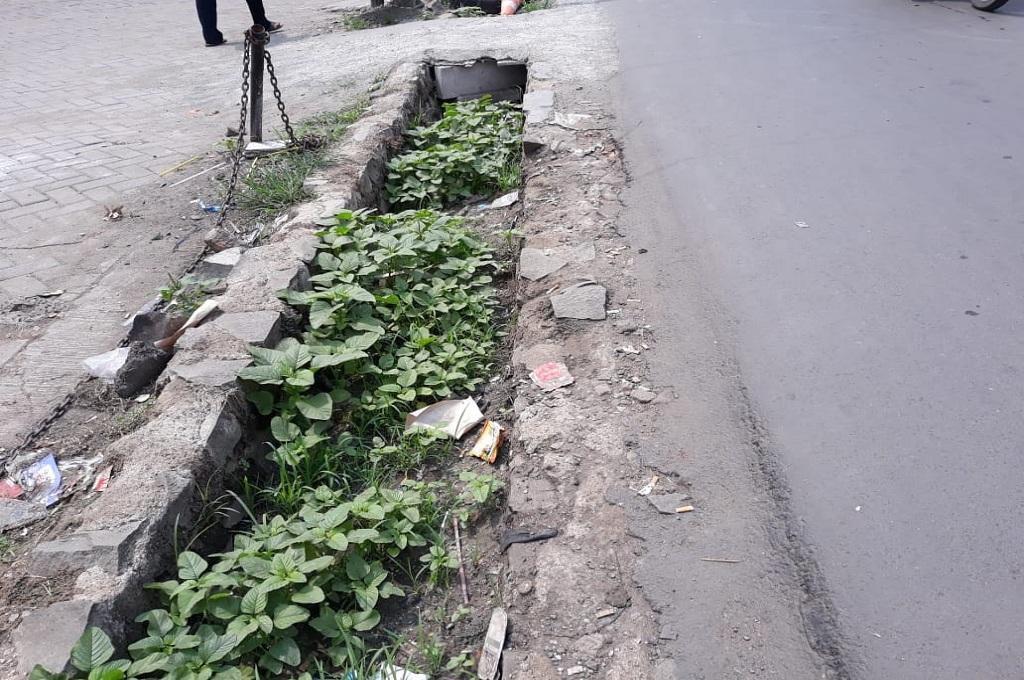 Selokan di Tangsel Jadi 'Pot' Tanaman Liar