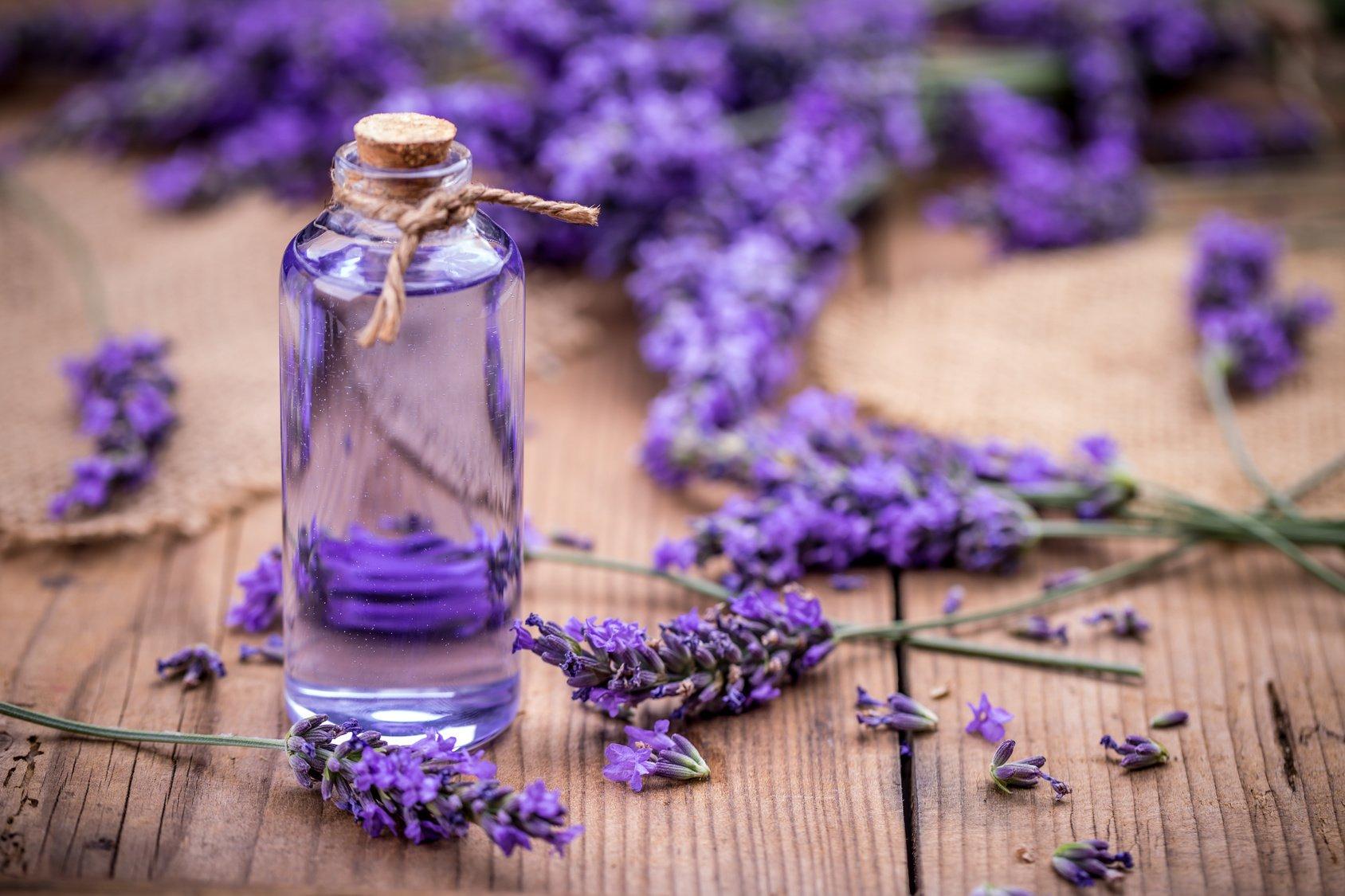 Aroma Lavender Efektif Kurangi Stres