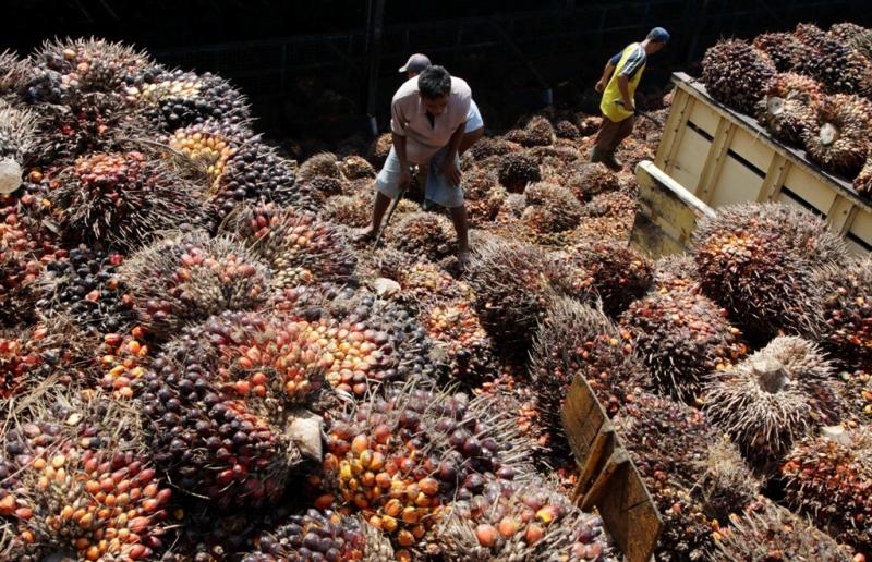 Pemerintah Diminta Longgarkan Pungutan Ekspor CPO