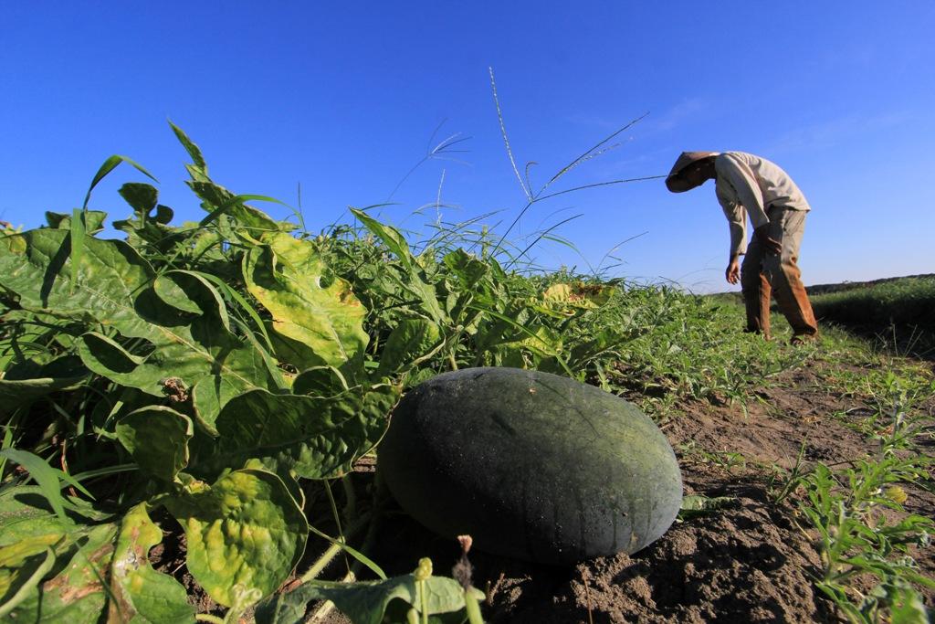 Permudah Petani, BLK Lembang Ciptakan Aplikasi Smart Farming