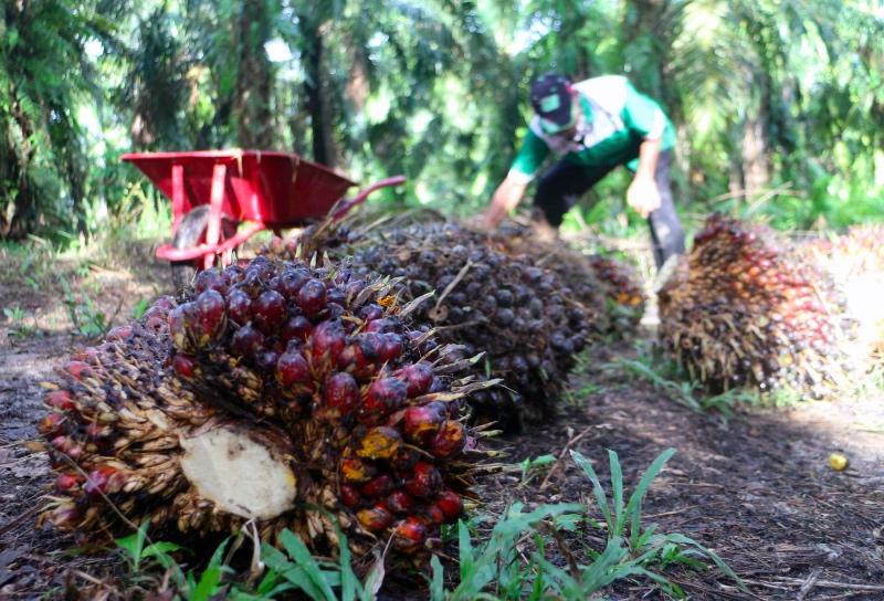 Industri Sawit Dinilai Bantu Pengurangan Kemiskinan Indonesia