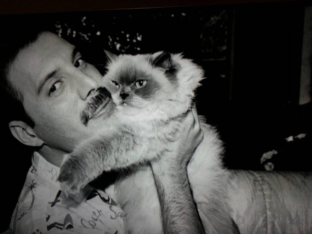Pemalu hingga Pecinta Kucing, 6 Fakta Unik Freddie Mercury