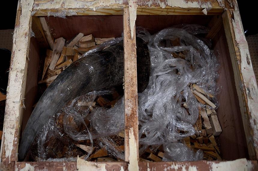 Penjual Cula Badak di Lampung Ditangkap