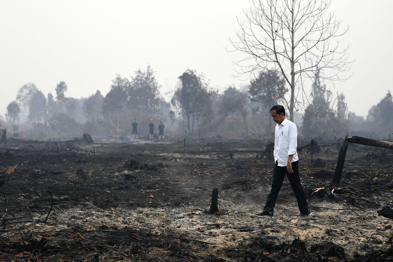 Jokowi Tinjau Penanganan Karhutla di Pelalawan
