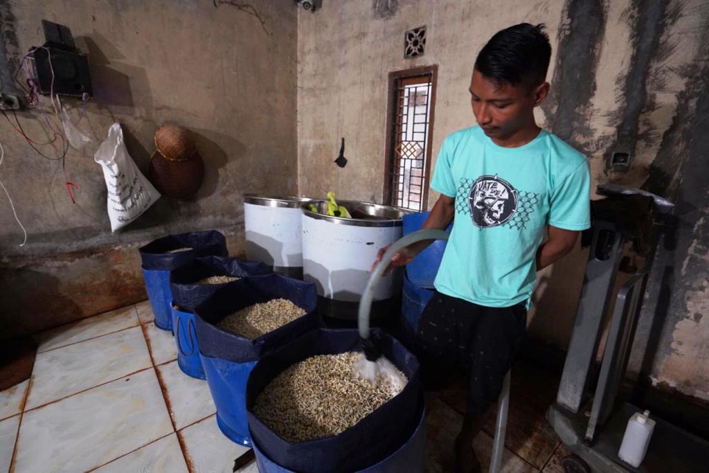 Sukses Bertani Toge di Rumah, Mas Toge Terbantu KUR BNI