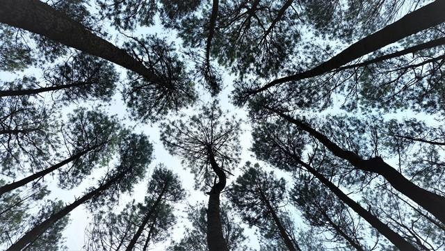Tarian Kabut Hutan Pinus Mangunan