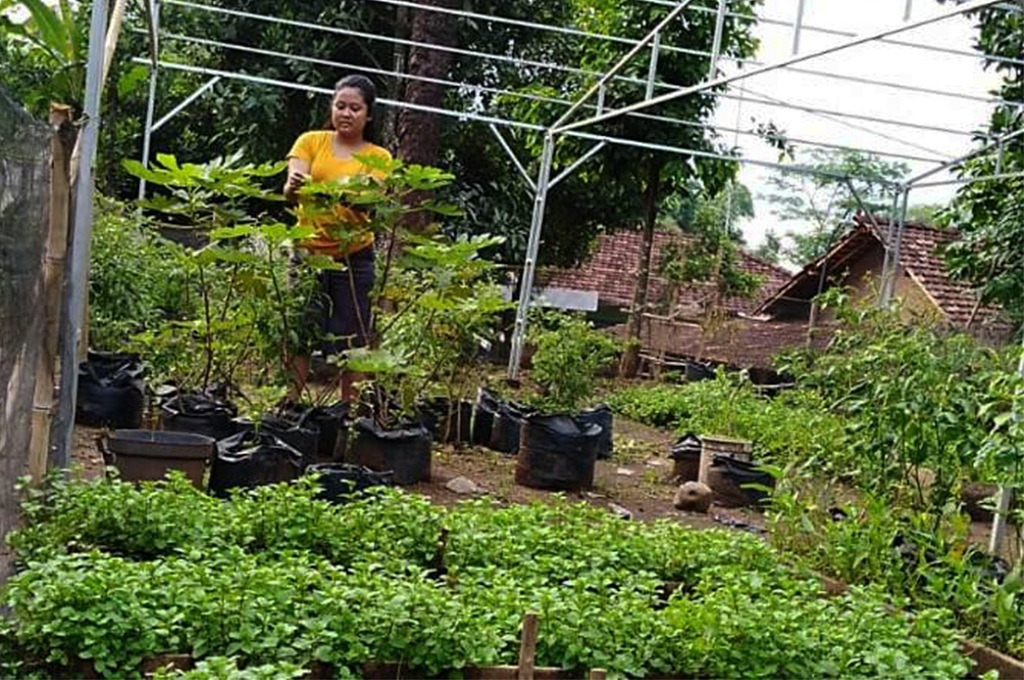 Kreasi Sarjana Sastra di Pertanian Organik