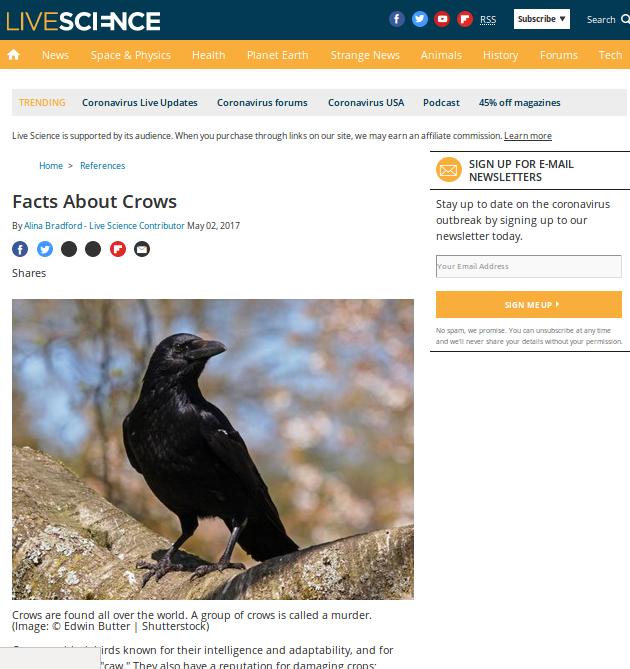 [Cek Fakta] Video Ribuan Burung Gagak Hitam Menyerbu AS di Tengah Pandemi Covid-19? Ini Faktanya