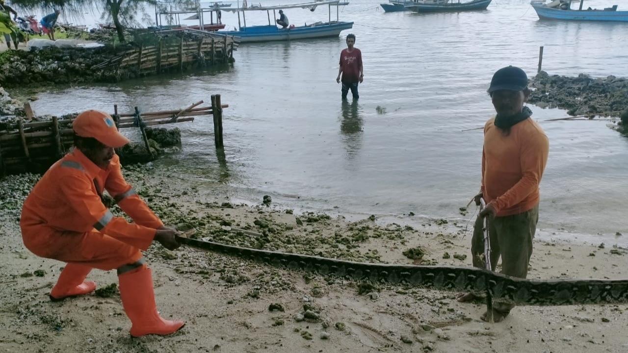 Ular Sanca 4 Meter Ditemukan di Pulau Pari