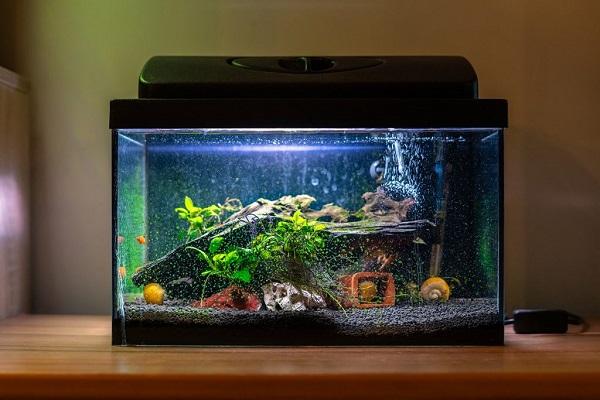 Jenis dan Jumlah Ikan Bisa Bawa Hoki bagi Pemilik Akuarium