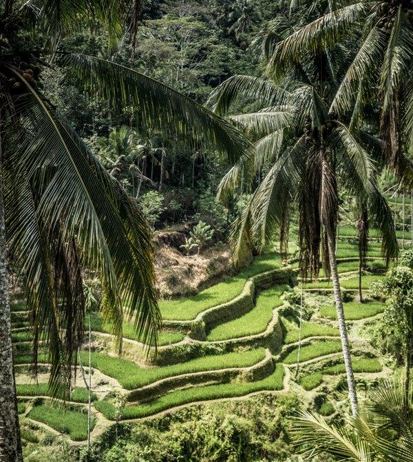 Lima Alasan Berkunjung ke Bali versi Media Asing