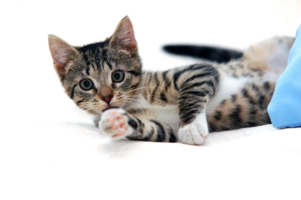 3 Tanda Kucing Anda tak Bahagia