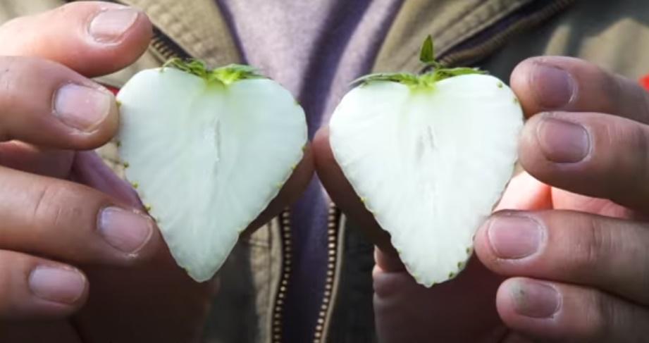 Perkenalkan White Jewel, Stroberi Putih asal Jepang