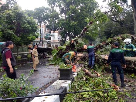 Puluhan Pohon di Kota Malang Tumbang