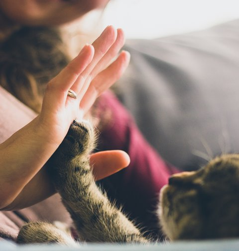 Tanda-tanda Kucing Menyukai Anda