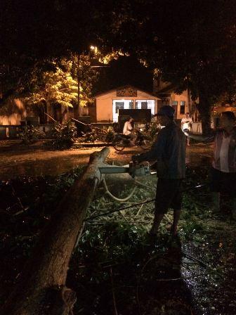 Pohon Bertumbangan di Medan Usai Hujan Deras dan Angin Kencang