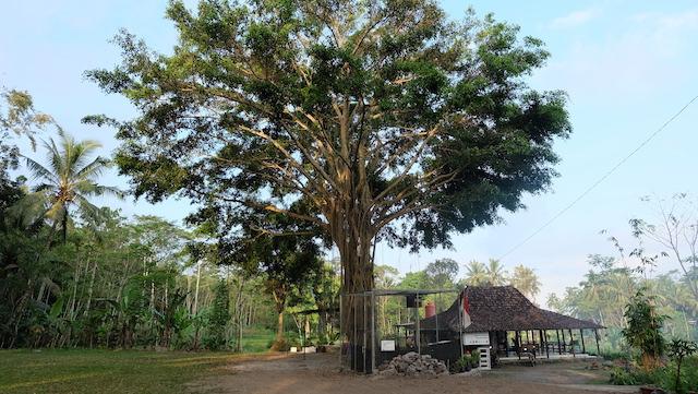 Wisata Pintar ke Pusat Studi dan Konservasi Serak Jawa